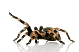 exposure therapy for treating phobias